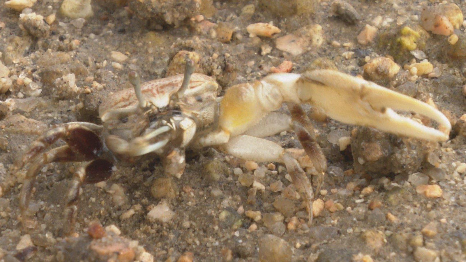 小さなハサミで砂粒を掴む