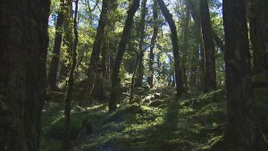 ニュージーランドの雄大な自然