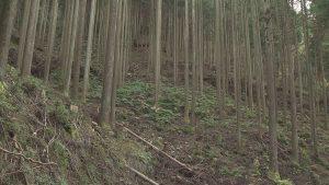 間伐作業が行われた山