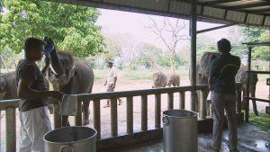 ゾウを保護する施設の様子