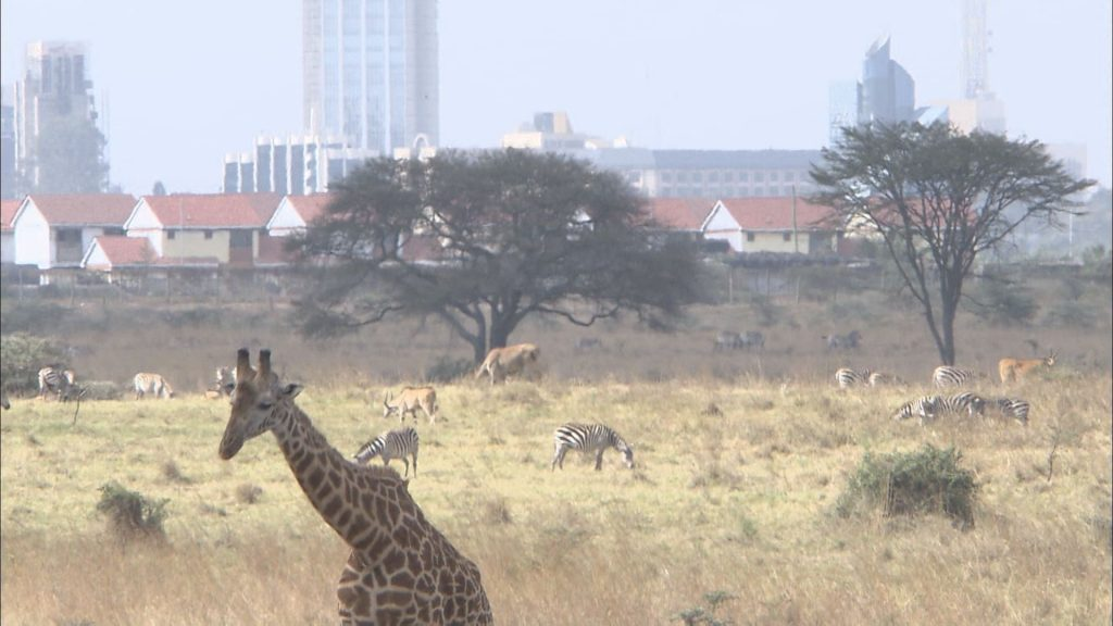 距離の近い、野生動物と人の暮らし