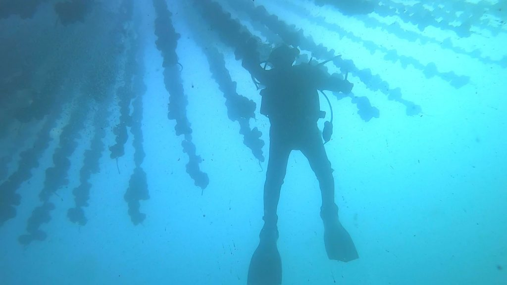 海の中の幻想的な世界