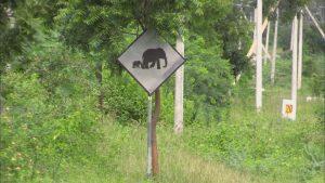 「ゾウの横断に注意」の標識