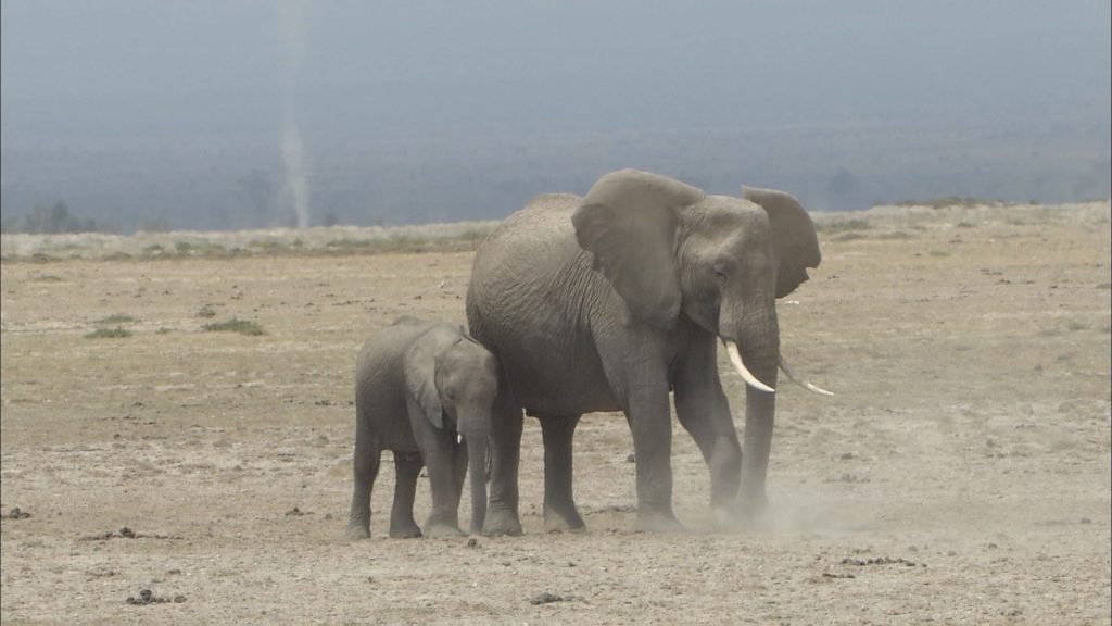 エサを探すゾウの親子