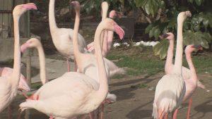 安佐動物公園のフラミンゴ