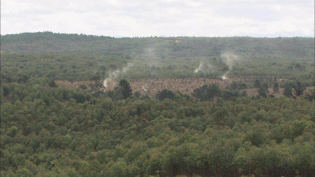 開発が進む進む熱帯雨林