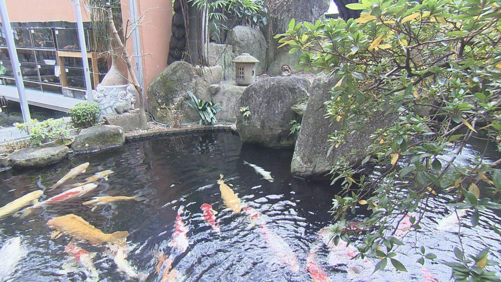 日本が世界に誇る泳ぐ芸術品
