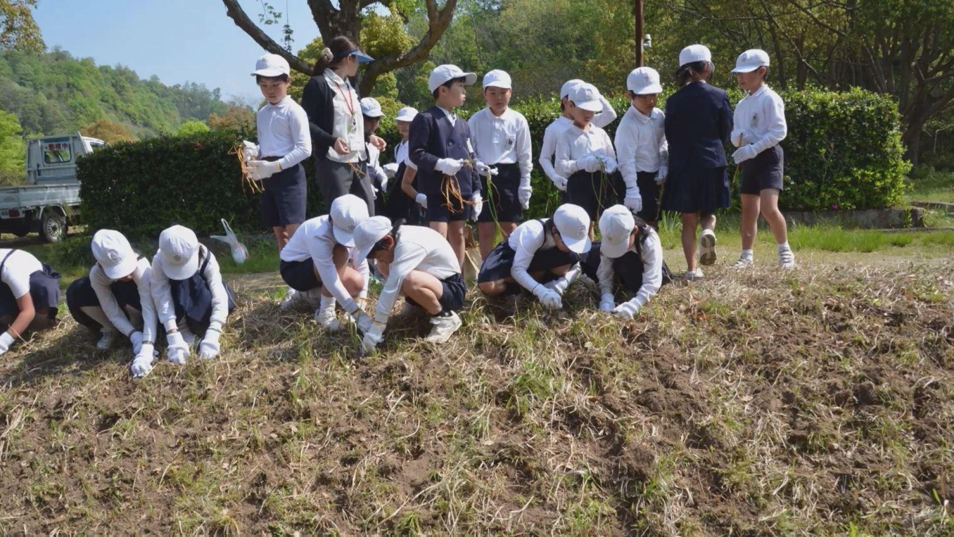 球根を植える小学生(画像提供:堂々川ホタル同好会)