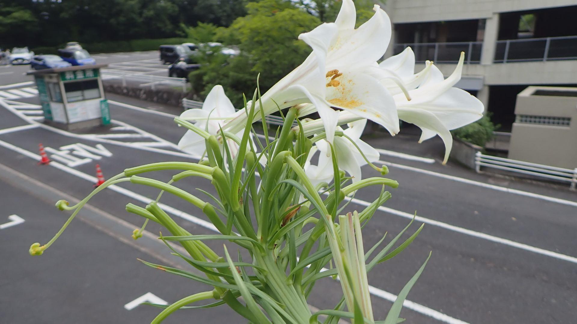 身近にもユニークな姿の植物があるかも?