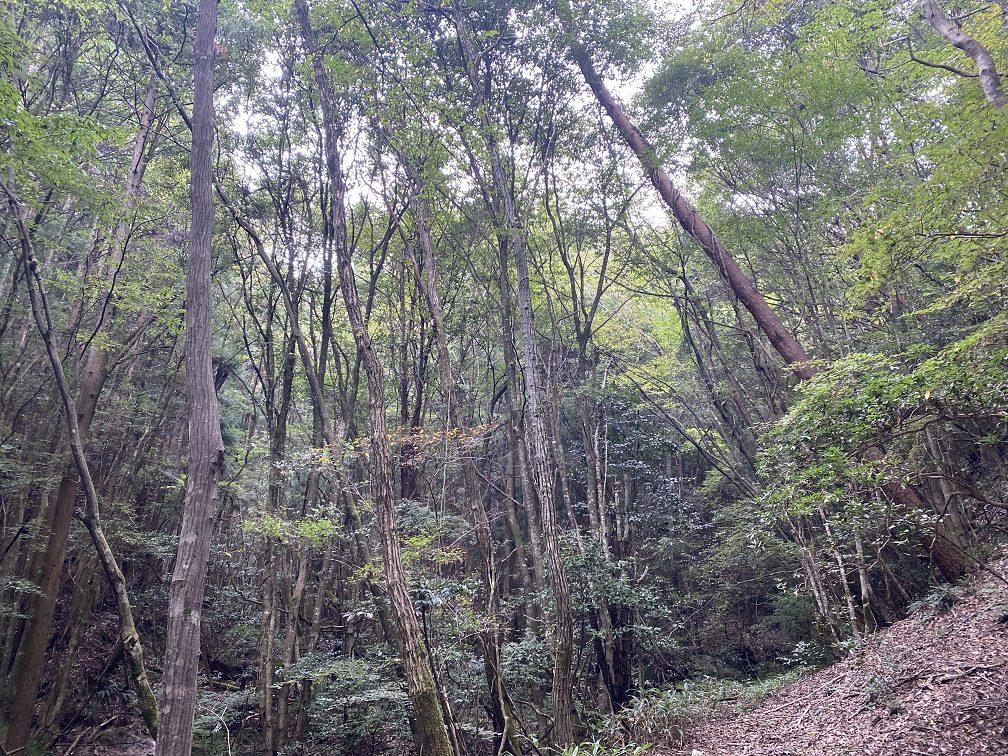 広葉樹の森に分け入る
