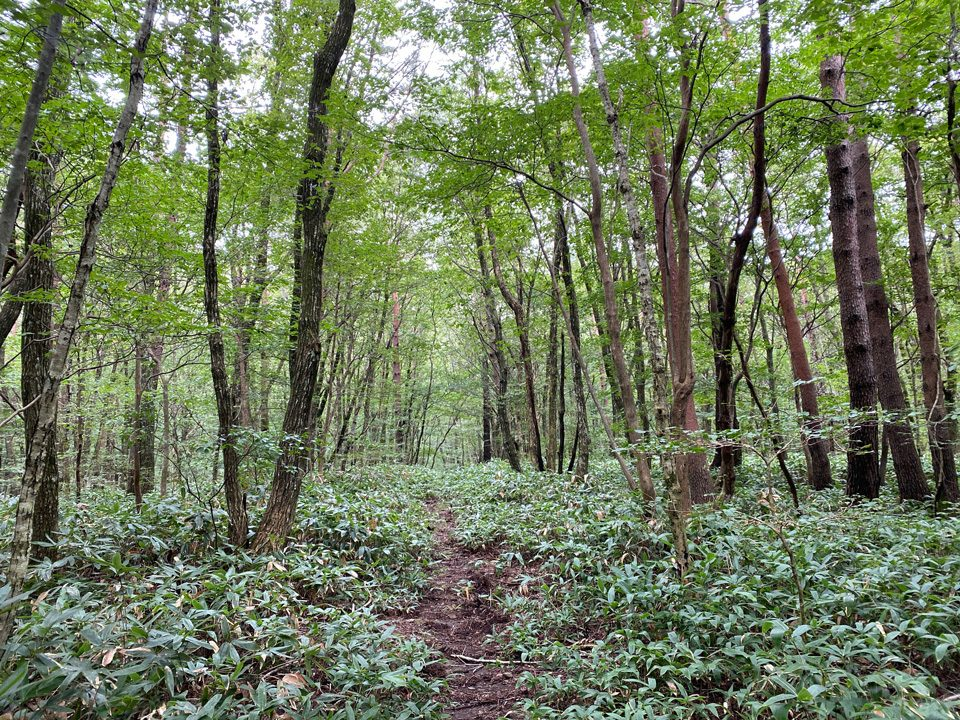広葉樹林の中を行く登山道