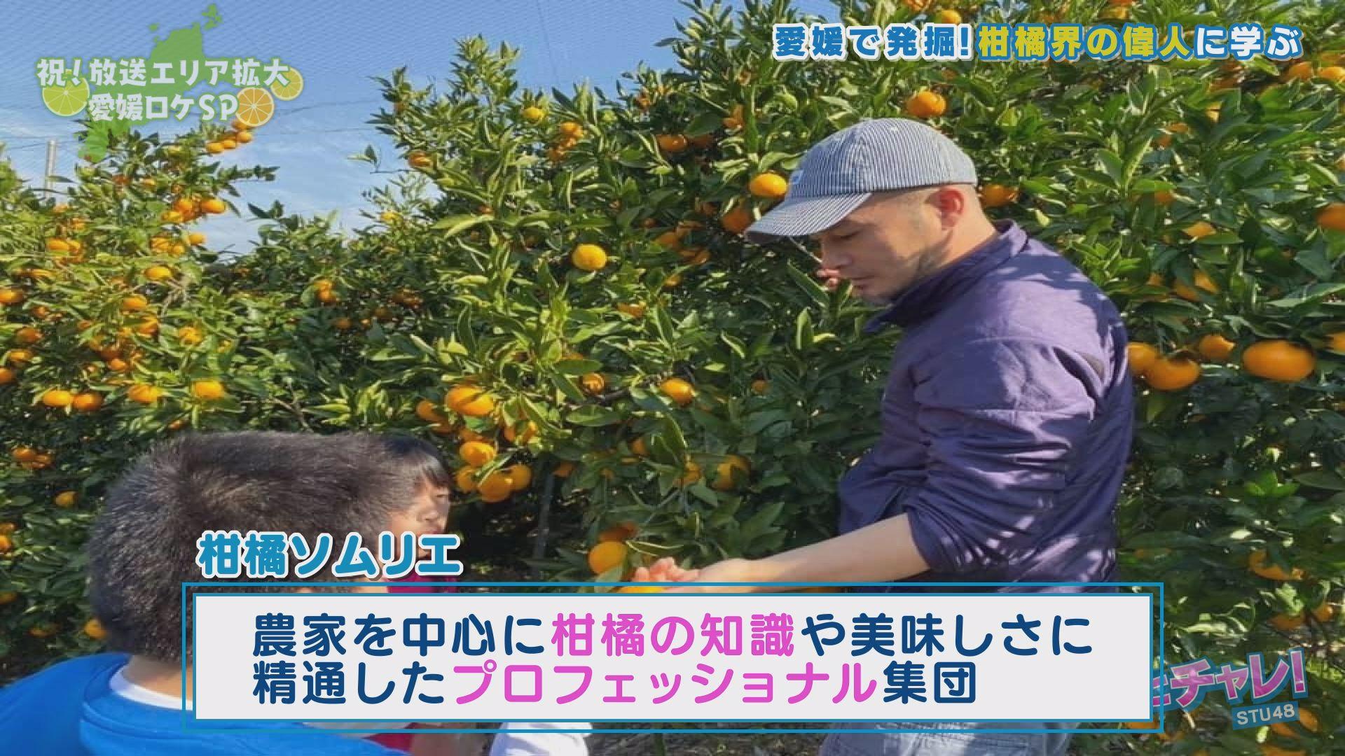 柑橘のプロフェッショナル集団が「柑橘ソムリエ」