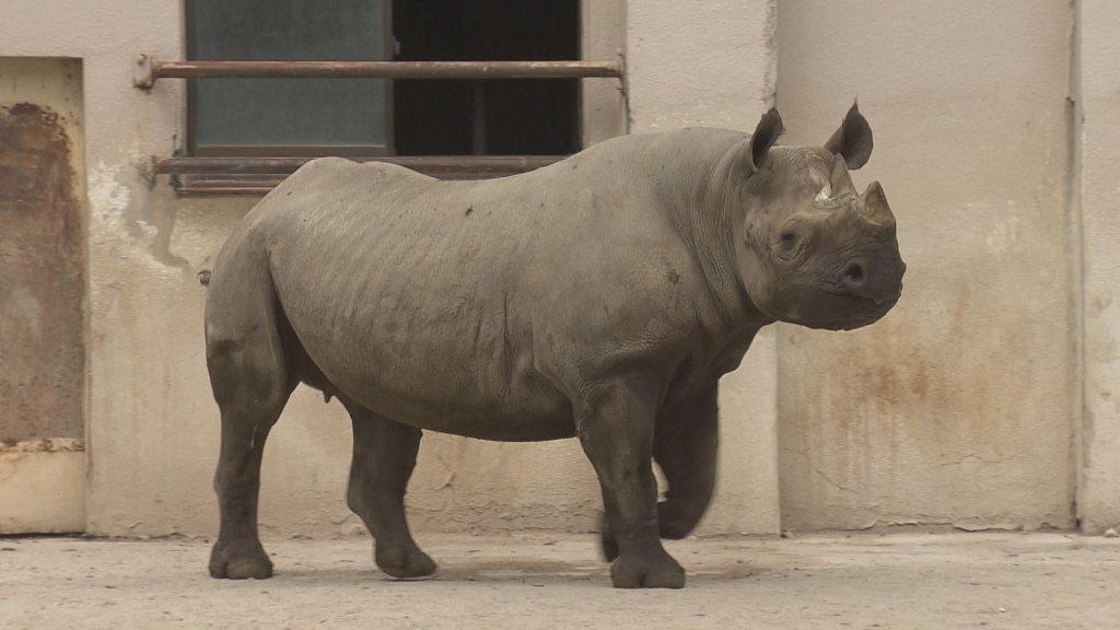 安佐動物園のサイ サキ