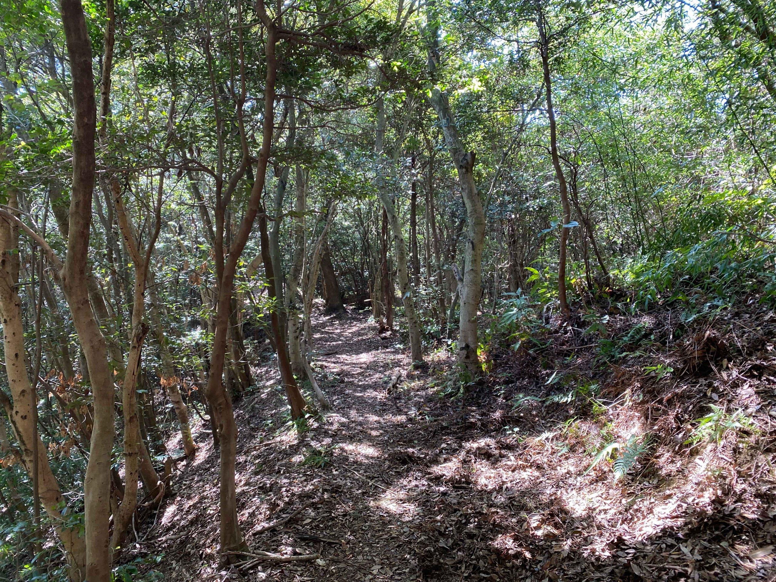 林間の尾根道を下る